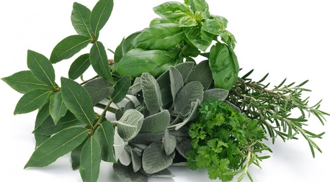 Discover how to use herbs in the nutrition of your family