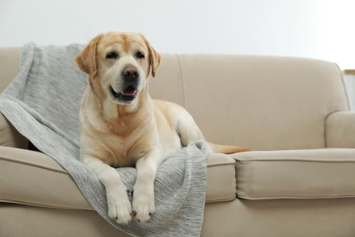 Why Are Built-In Vacuum Cleaners So Good for Homes with Dogs_