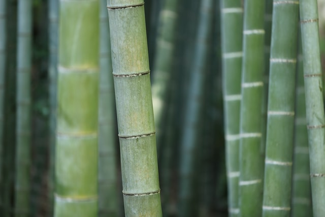 bamboo made product